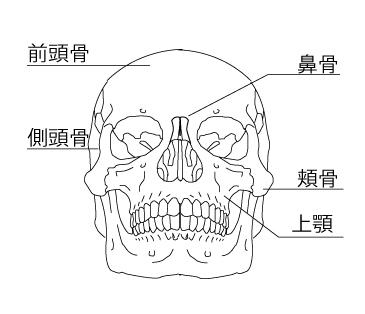 頭骸骨_説明用_03